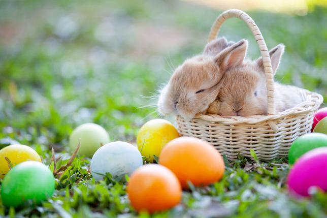 Zdrowych i pogodnych Świąt Wielkanocnych